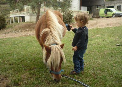 Bebe panse poney